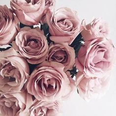 p i n t e r e s t || sarahesilvester #Flora&Fauna-Flowers&Plants