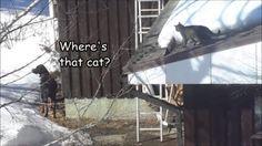 ..the winter games continue..😺 #fun #catsanddogs #mollycatfinland #finland #dog #dogsofinstagram #catoftheday #catsofig #catvideo #hideandseek #catchmeifyoucan #cat #cats #instacats #instacat #outdoors #petsatplay #instapets #instavideo #catlover #catpeople #curiosity #pets #animalsco #instafun #instalikes