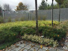 Ogród pod trzema dębami - strona 178 - Forum ogrodnicze - Ogrodowisko