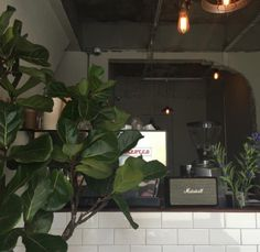 Plant Aesthetic, Aesthetic Themes, Aesthetic Pictures, White Aesthetic, Aesthetic Photo, Cafe Design, Interior Design, My Favorite Color, Decoration