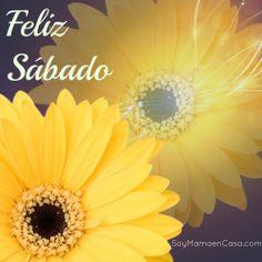 #feliz #sabado #saludos  ww.soymamaencasa.com