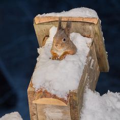 winter house - squirrel in a birdhouse with snow
