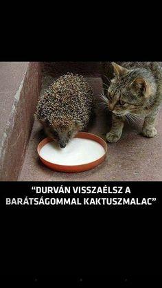 Bad Memes, Cute Memes, Funny Cute, The Funny, Funny Jokes, Animals And Pets, Funny Animals, Cute Animals, Hahaha Hahaha