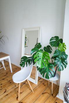 theadorabletwo_wohnung_interior_berlin_Ikea_Prenzlauerberg_dielenboden_altbau_monstera_pflanze