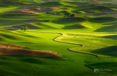 """""""Lone Tree, Palouse Hills""""  A break in the clouds allowed some evening light…"""