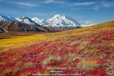 Photo of Scenic view of Mt.McKinley from Thorofare Pass with colorful Autumn tundra in the foreground, Denali National Park, Interior Alaska...