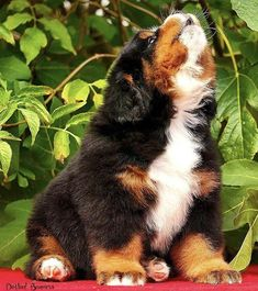 Dog And Puppies Small .Dog And Puppies Small Cute Dogs And Puppies, Baby Dogs, I Love Dogs, Pet Dogs, Doggies, Dog Tumblr, Animal Tumblr, Cute Baby Animals, Animals And Pets
