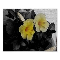 #customized - #Yellow Hibiscus selective color photo Poster