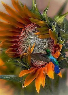 sunflower ' n hummingbird