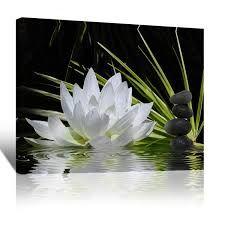 zen λωτος - Google Search Zen, Google Search, Plants, Plant, Planets