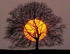 Amazing sun and tree