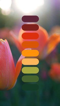 Color Schemes Colour Palettes, Colour Pallete, Wedding Color Schemes, Color Trends, Color Combos, Sunset Color Palette, Fall Color Palette, Color Swatches, Color Of Life