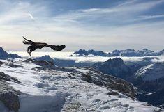 National Geographic Adler Greifvogelwarte Landskron Österreich National Geographic, Mount Everest, Mountains, Nature, Travel, Film, Instagram, Pictures, Alexander The Great