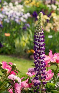 Oversigt over nemme planter i haven
