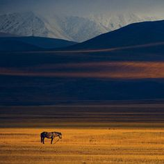 Horse in Steppe, Mongolia