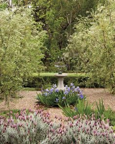 A classic design element in France and Italy, gravel occurs naturally and provides good drainage for plants while suppressing weeds. Horton used pea gravel as the base for a formal grid of four olive trees. As a focal point, she placed an armillary sphere in the middle and surrounded it with springblooming bearded irises. In the foreground, Spanish lavender complements them; a hedge of westringia provides a clean backdrop.