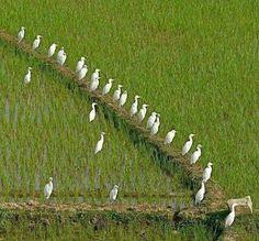 Beautiful Bangladesh: King Storks - all in a row. Amazing India, Amazing Nature, Beautiful Moments, Beautiful Birds, Village Photography, Clay Wall Art, Village Photos, World Pictures, Wonderful Picture