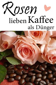 Kaffeesatz als Rosendünger Roses love coffee grounds. As a fertilizer, it strengthens roses and make Gardens By The Bay, Small Gardens, Outdoor Gardens, Veggie Gardens, Vegetable Gardening, Organic Gardening, Irrigation, Dulux Valentine, Patio Plants