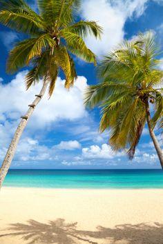 palm trees at a tropical beach in the Caribbean