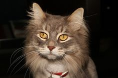 The cat by R Dumont, via Flickr ew919