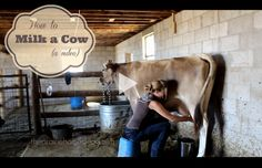 Ever wanted to milk a cow? Here's a fun video--->