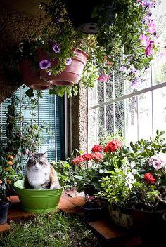 Blumen Pflanzen urban jungle