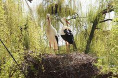 Alsazia con bambini:  Hunawwihr il parco delle cicogne e delle lontre