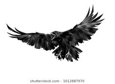 Find Painted Flying Bird Raven On White stock images in HD and millions of other royalty-free stock photos, illustrations and vectors in the Shutterstock collection. Silhouette Tattoos, Crow Silhouette, Silhouette Painting, Black Crow Tattoos, Eagle Tattoos, Black And Grey Tattoos, Tattoo Black, Crow Art, Raven Art