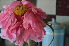 peonia # pink # color power # www.cabiancadellabbadessa.it