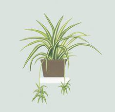 15 plantas que aportarán bienestar y salud a tu casa Plant Painting, Plant Drawing, Plant Art, Plant Wallpaper, Flower Wallpaper, Wallpaper Backgrounds, Plant Illustration, Botanical Illustration, Chlorophytum