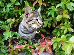 Cat approaching