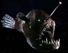 Animales raros: el demonio marino negro