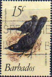 Barbados 1979 Birds Fine Used SG 627a Scott 570 Other West Indies and British Commonwealth Stamps HERE!