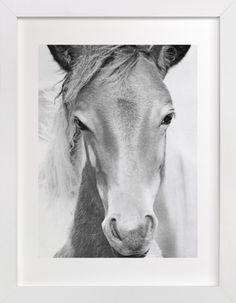 Wild and free. by Dawn Smith at minted.com