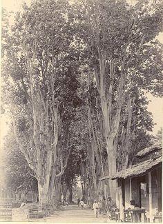 Straatbeeld in Ternate circa 1900.