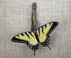 Tiger Swallowtail Butterfly Wall Hanging Sculpture Hand Carved Wood Carving by Mike Berlin by BerlinGlass on Etsy