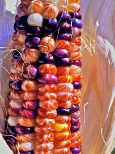 Indian Corn in Fall Sunshine Fruit And Veg, Fruits And Vegetables, Rainbow Corn, Glass Gem Corn, Growing Grapes, Seed Pods, Belle Photo, Harvest, Food Photography