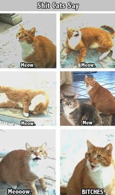Things That Cats Say // funny pictures - funny photos - funny images - funny pics - funny quotes - #lol #humor #funnypictures