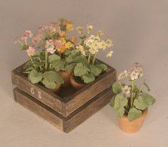 Flowers Pots in Crate #5 by Chantal Siguret