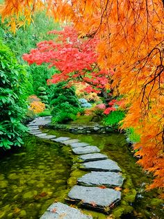 Tranquil Japanese Garden built in the world-famous Butchart Gardens, located in Brentwood Bay in British Columbia, Canada, boasts lavish floral display gardens and a wide array of trees. Shown above is the treasured estate's Japanese garden. British Columbia, Columbia Travel, Wonderful Places, Beautiful Places, Amazing Places, House Beautiful, Beautiful Gorgeous, Hello Gorgeous, Stunning View
