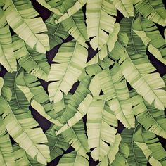 Manele Black (Green) - Tropical Leaf Pattern – Diamondhead Fabrics