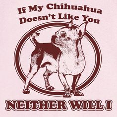 If My Chihuahua Doesnt Like You