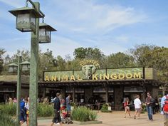 Top 10 Must Do's at Disney's Animal Kingdom