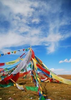 You're gonna see many quaint flags when cycling Qinghai Lake.