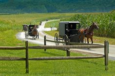 Lancaster, Pennsylvania - Amish country Where I was born. Lancaster Amish, Lancaster Pennsylvania, Lancaster County, Amish Farm, Amish Country, Country Roads, Pictures Of America, Pennsylvania Dutch Country, Amish Culture