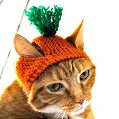 "Legenda: ""Tá, zoa, vai."" Carrot Costume - Cat or Dog. $12.00, via Etsy."