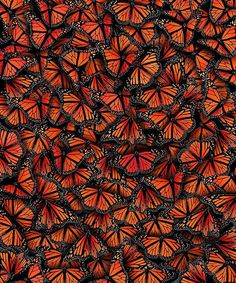"192 Likes, 2 Comments - Illustrated Monthly (@im_gallery) on Instagram: ""Repost via @art_collective Art in Nature - Butterflies Colony #artcollective2017"""