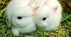 tatlı tavşanlar yavru - Google'da Ara