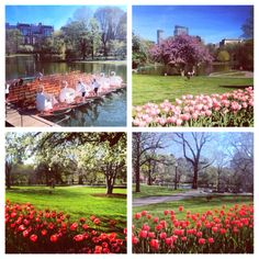 Springtime in Boston...I've been to Boston many times, but not in this pretty part of it!