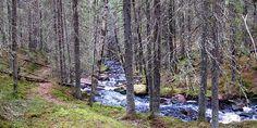 Katikka canyon - Kauhajoki, Finland. Image Svg, Finland, Tourism, Game, Country, Nature, Plants, Travel, Inspiration